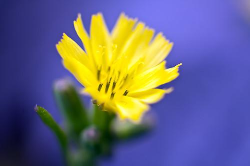 little_flower_side