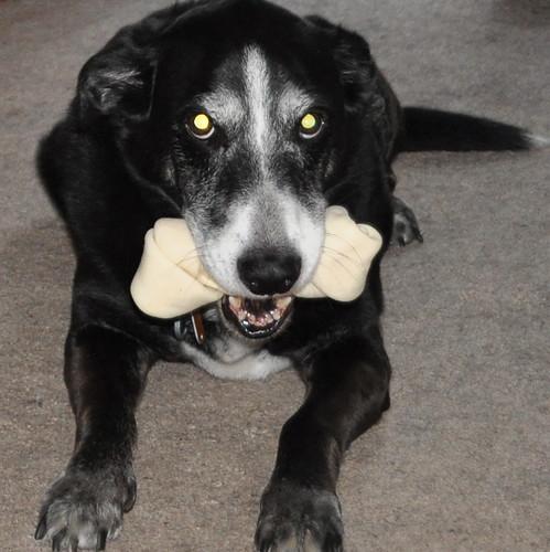 Herman with Mayas bone