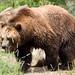 Woodland Park Zoo Seattle 085