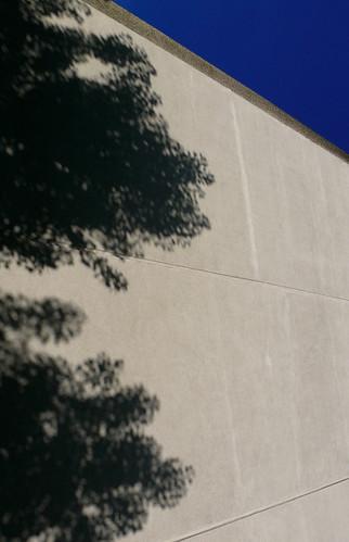 L'arbre qui cache le building 2