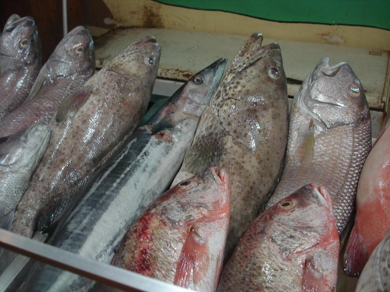Yet more fish...