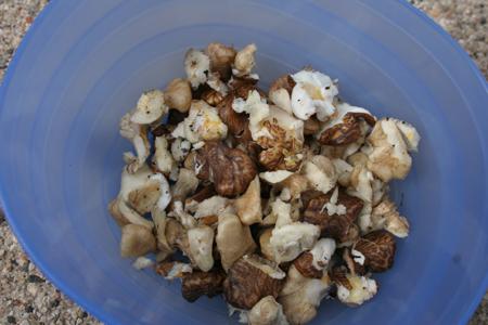 Black walnuts!