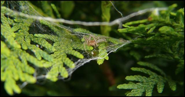 #147/365 Spider