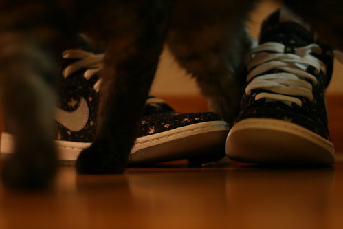 Wednesday: New Shoes with Cat