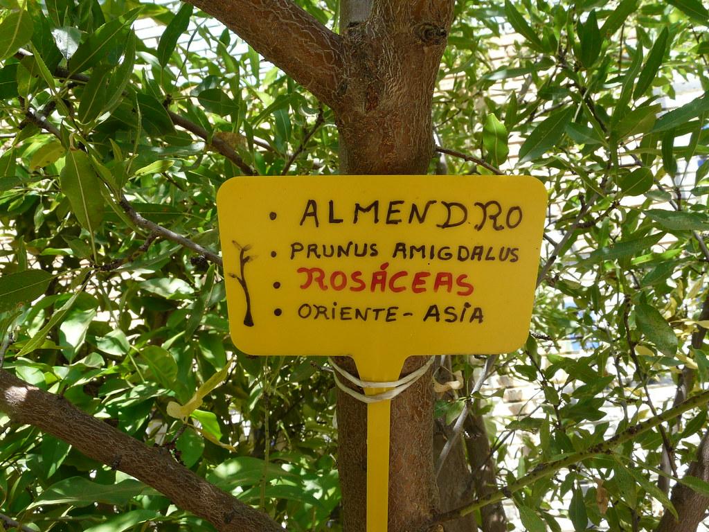 LES HEMOS PUESTO ETIQUETAS A CADA PLANTA PARA CONOCERLAS MEJOR