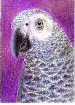 ATC:  African Gray (traded)