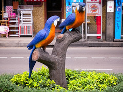 Two Parrots in the Median