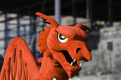 Welsh Dragon, St David's Day / Draig Goch, Dyd...