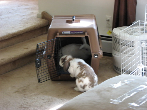 buns checking out the carrier