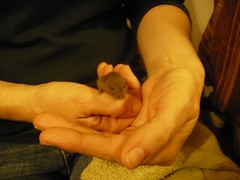 Gizmo and my hands