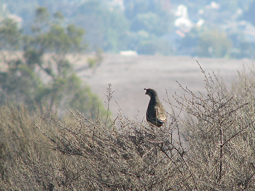 Rancho Sierra Vista Satwiwa 03