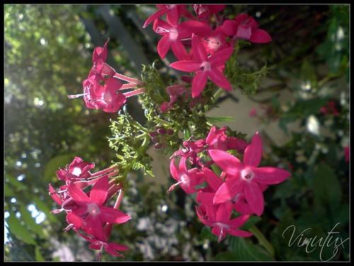 Pinky-morning