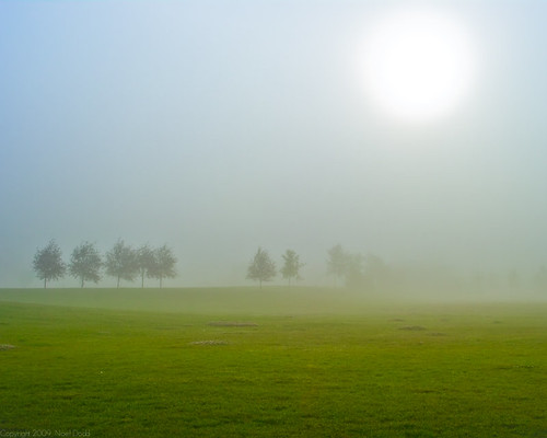 Ever see fog outside when you wake up? Grab your camera and get out there!
