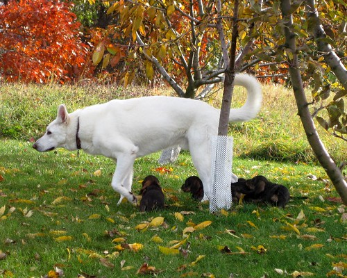 Nov. 1 Fritz and his babies37