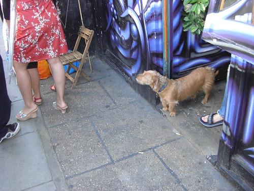 A good little dog at Portobello Market.