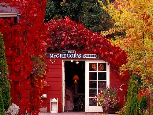 Halloween_at_McGregor's_Silverdale_Washington