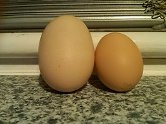 Regular size chicken egg on the right and Susans whopper on the left!
