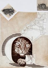 Marianna Antonacci-Il gatto geometrie di avvistamento