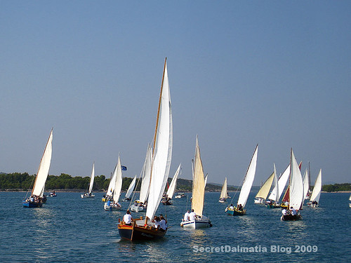 The regatta!