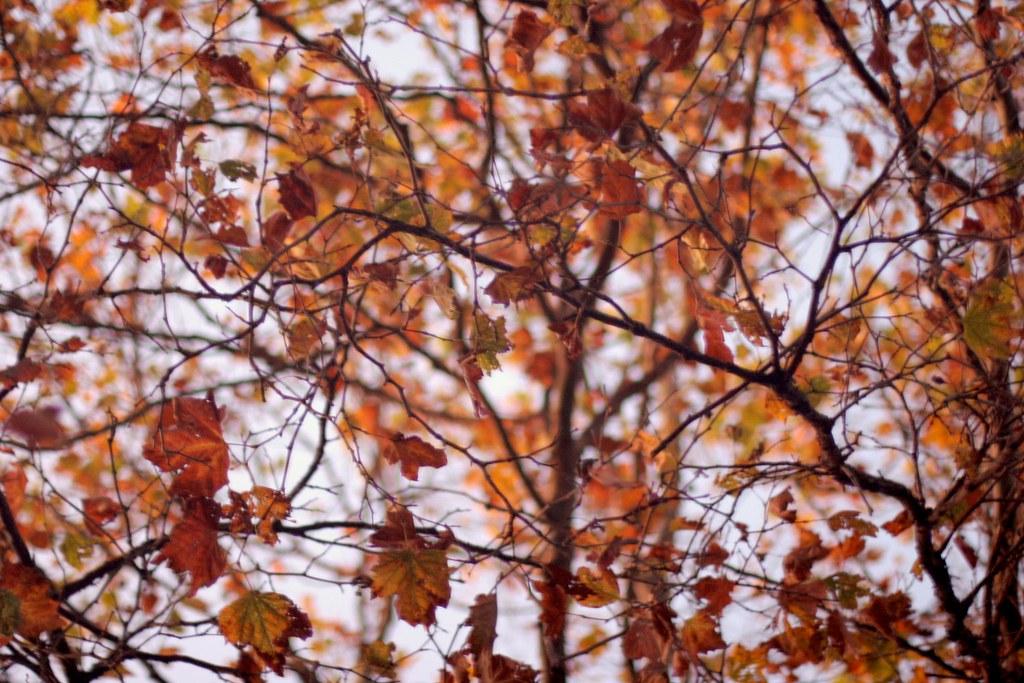 Low-light fall leaves