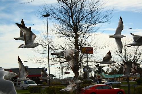 Swarmed, by LouFCD on Flickr