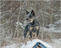 091219_Caisa loves snow 1