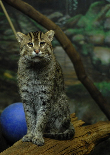 Proud Papa Fishing Cat