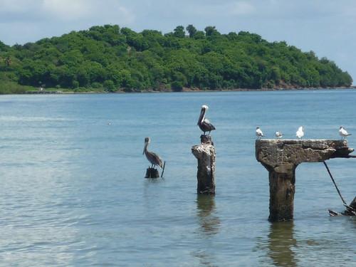Birds in Humacao