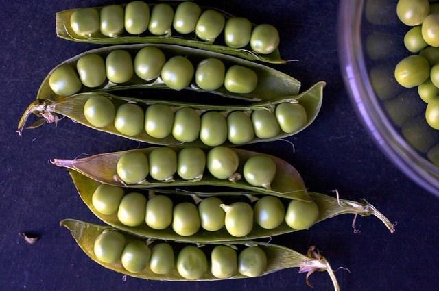 fresh peas in pods
