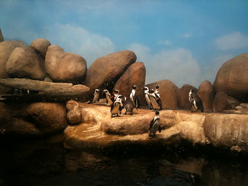Penguins at the Cal Academy of Sciences