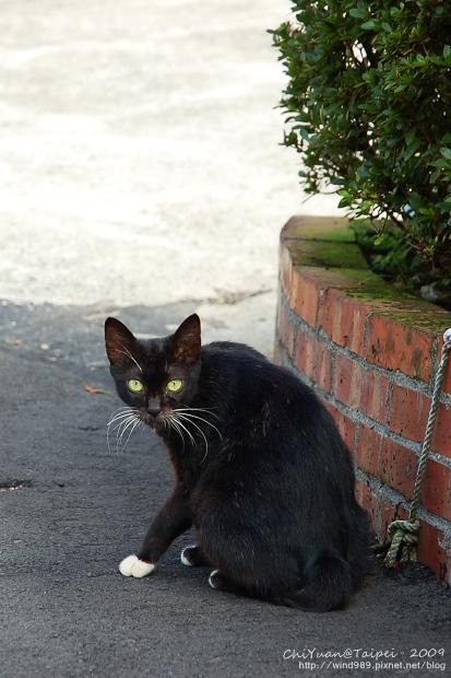 [侯硐]Cat。貓鎮中的一紳士貓02.jpg