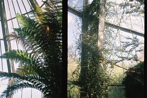 palmgarten 4
