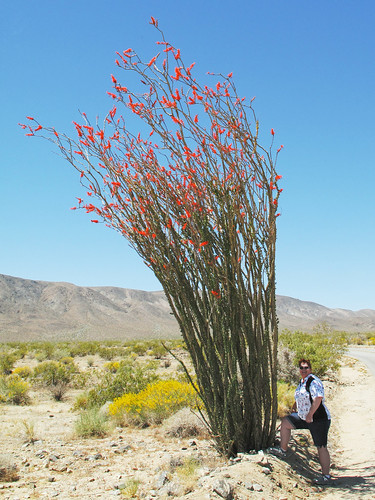 Ocotillo by you.