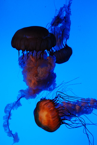 The jellyfish ballet.