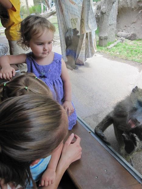 Monkey Lick