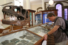 At the Sedgwick Museum of Earth Sciences, University of Cambridge. Photo by Richard Carter.