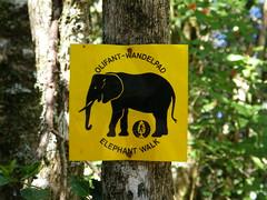 Senda de elefantes