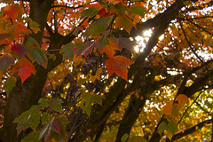 Day 300/365 - A wee bit o sun through the fall...