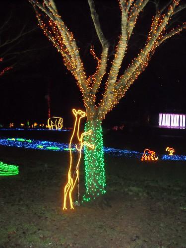 Zoo Lights 2009