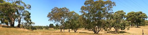 Oakbank Hills Panorama III