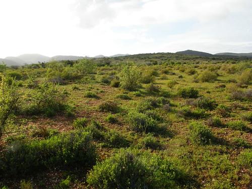 Karoo suculento, reserva de Vrolijkheid