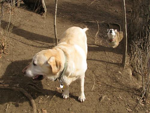 Kishka wooing behind Sadie
