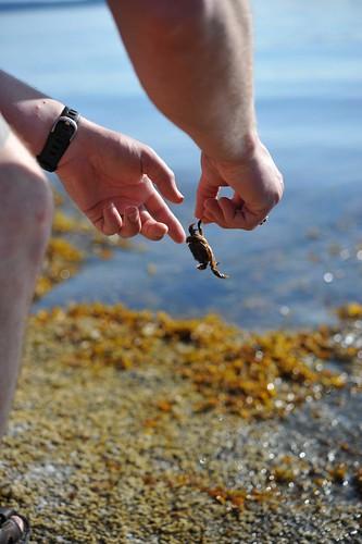 tiny crab catch