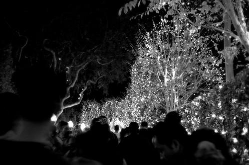 Disneyland, December 2008