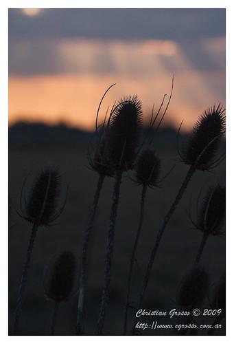 "Atardecer en Cañuelas • <a style=""font-size:0.8em;"" href=""http://www.flickr.com/photos/20681585@N05/3788776812/"" target=""_blank"">View on Flickr</a>"
