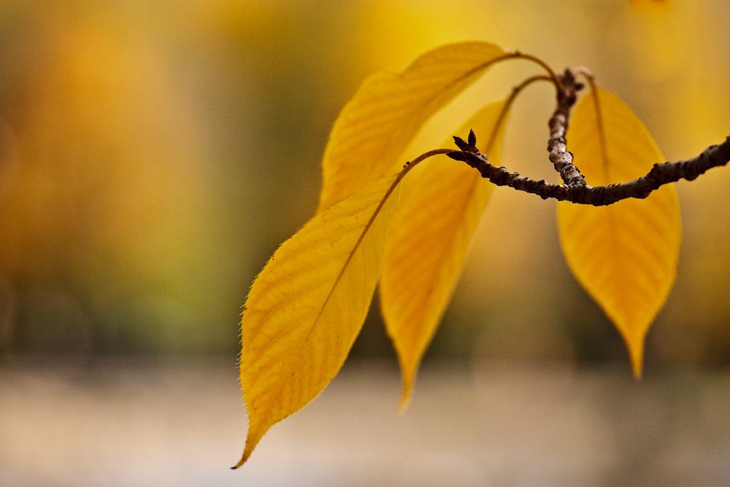 Autumn Gesture