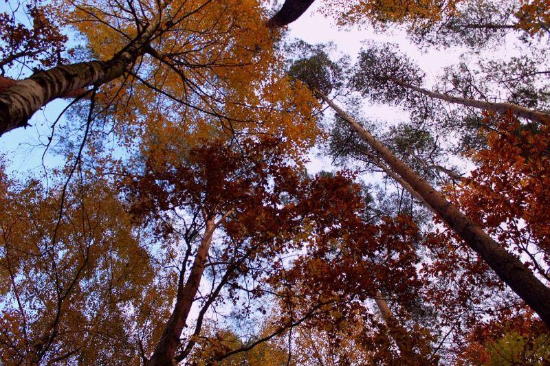 jesień, autumn