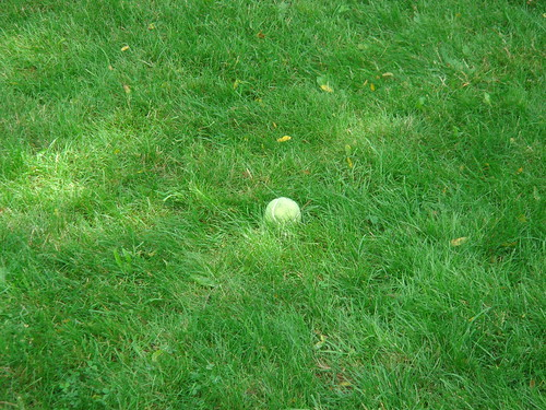 Sometimes she forgets what shes doing....and leave the ball in a random spot in the yard.