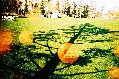 theCarol xDingdong*16 -playground