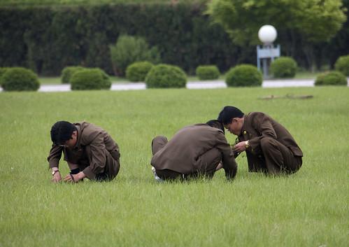 Starving or gardening? North Korea